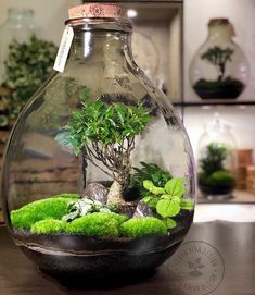 10 Extraordinary Indoor Garden Design And Ideas Bottle Terrarium, Moss Terrarium, Bottle Garden, Terrarium Plants, Terrarium Wedding, Diy Bottle, Succulent Terrarium Diy, Tropical Terrariums, Water Terrarium