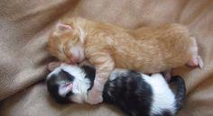 人気記事:【動画】抱き合って眠る子猫が可愛すぎる http://skaihahiroi.blog.fc2.com/blog-entry-315.html …