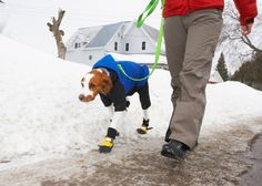 Tips for walking your dog and getting your dog to go potty in the snow.