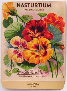 EVERITT'S SEED STORE, Nasturtium 804, Vintage Seed Packet, la