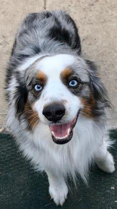 Rosco the good boy http://ift.tt/2o1rt4A