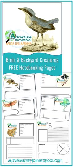 FREE Birds and Backyard Creatures notebooking pages for birds and backyard animals for homeschool. Make learning fun and get kids excited about homeschool! Nature Activities, Science Activities, Science Topics, Science For Kids, Science And Nature, Science Week, Elementary Science, Science Classroom, Homeschool Curriculum