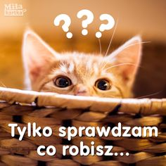 Co robisz #kartka #kotek #kotki #siema #hi #siemanko #przyjaźń #kociak #polska #poland #polish #zabawne #żart #pocztówki Reaction Pictures, Funny Pictures, Happy Birthday Video, At Home Science Experiments, Irish Singers, Weekend Humor, Having No Friends, Animal Jam, Indie Kids