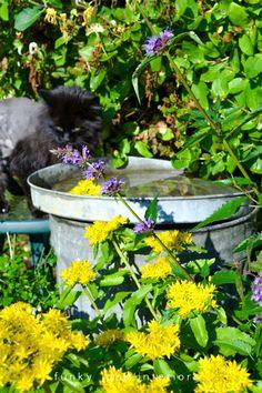 Garbage can birdbath ...can't get much simpler