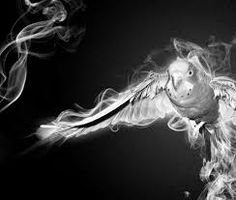 Image result for smoke images