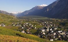Chemin du Vignoble: wine, wines, Association of the path of the vineyards, Valais, tourism, red wines, white wines, walking paths, hiking trails, Valaisanne Association Hiking, Interprofession of Vine and Wine of Valais, Valais vineyards, vintners, Weinweg.