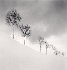 Nine Silver Birches, Shibetsu, Hokkaido, Japan, 2009 by Michael Kenna.
