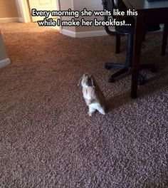 Funny Pictures Of The Day - 96 Pics