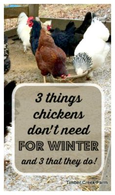 Raising chickens has gained a lot of popularity over the past few years. If you take proper care of your chickens, you will have fresh eggs regularly. You need a chicken coop to raise chickens properly. Use these chicken coop essentials so that you can. Raising Backyard Chickens, Backyard Chicken Coops, Keeping Chickens, Diy Chicken Coop, Pet Chickens, Urban Chickens, Meal Worms For Chickens, Heated Chicken Waterer, Nesting Boxes For Chickens