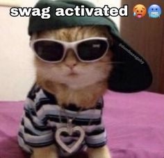 All Meme, Stupid Memes, Stupid Funny, Hilarious, Animal Jokes, Funny Animals, Cute Animals, Funny Reaction Pictures, Funny Pictures