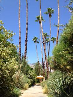 Desert path the Parker Palm Springs