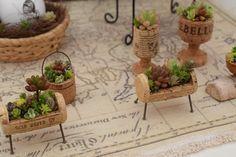 Little cork gardens