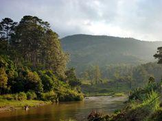 Interesting Facts About Madagascar: Ranomafana National Park