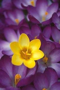 18 Ideas Flowers Purple Yellow Colour For 2019 Mellow Yellow, Purple Yellow, Complimentary Colors, Purple Aesthetic, Color Photography, Violet, Flower Power, Planting Flowers, Beautiful Flowers