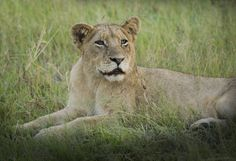 Africa -betty colombo 2015