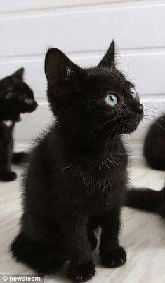 Phat Black chatte pic