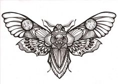 Image result for cicada study drawing