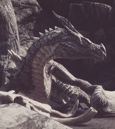 Imagem de dragon, fantasy, and medieval