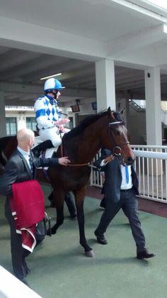 Al Kazeem today at hippodrome de Longchamp... Good job Champion ! #horseracing