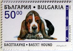 Bulgaria.  BASSET HOUND.  Scott 3972 A511, Issued 1997 Feb 25, Litho., Perf. 13,  50. /ldb.