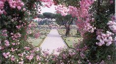 Rome's dreamlike Roseto Comunale (Municipal Rose Garden) in the Via di…
