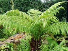 opter pour les fougères - les plantes d'ombre parfaites pour votre jardin