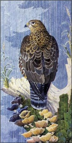 Buzzard In The Rain - Charles Tunnicliffe