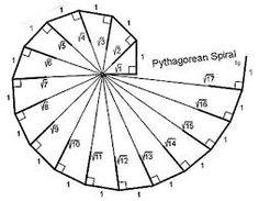 spiralen in de natuur - Google zoeken