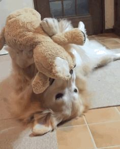 dog and stuffed animal