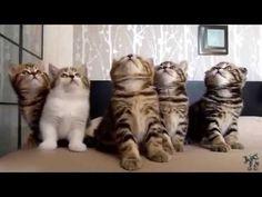 A nuk jane Kafshet e mrekullueshme ..... Are not animals wonderful? - YouTube