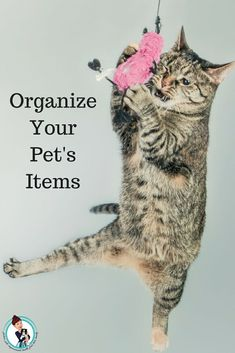 Organize Your Pet's Items! Clean Up, Clear Out, And Bond. #pets #animallovers #petsarefamily #petsoftwitter #organization  via @FashionBeyond40
