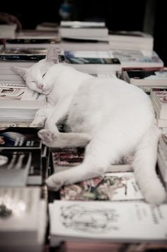 cat nap on books