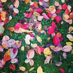 Autumn 'sweeties'!