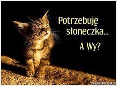 Potrzebuje słoneczka... Cute, Photography, Animals, Polish, Sweet, Humorous Sayings, Animales, Candy, Photograph