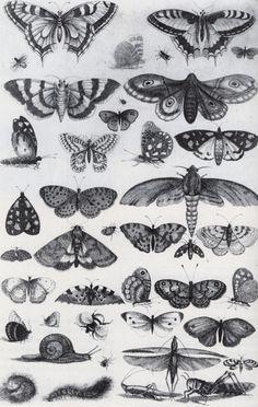 papilons