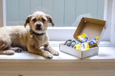 This Company Wants To Give Free Products To Your Dog!!! Pinchme.com Absolutely free samples/products, free shipping too! In exchange for a review of the free product.