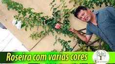 Roseira com flores de cores diferentes, aprenda como fazer - YouTube