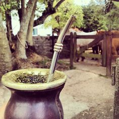 Drinking mate by the horses at the estancia in Uruguay.