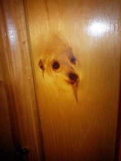 Funny pictures about It's A Doggy Door. Oh, and cool pics about It's A Doggy Door. Also, It's A Doggy Door photos. Religious Humor, Atheist Humor, Humor Religioso, Things With Faces, Crazy Faces, Funny Animals, Cute Animals, Wood Dog, Les Religions