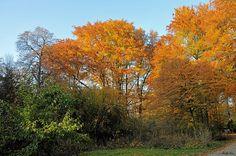 Herbst im Englischen Garten  (Explored)