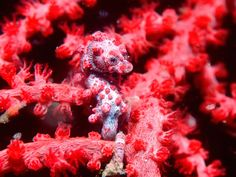 In this photo gallery, amazing seahorse photos and pictures with you.