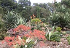 Arizona Cactus Garden, Stanford University.