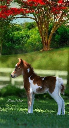 Pretty Horses, Beautiful Horses, Animals Beautiful, Cowgirl And Horse, Horse Love, Cute Baby Animals, Animals And Pets, Wild Animal Wallpaper, Cute Ponies