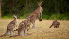 Lo mejor del Outback © Eligenuestraaventura Melbourne, Lonely Planet, Australia, Animals, Great Barrier Reef, Tropical Rain Forest, Kangaroos, Sharks, National Parks