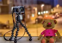 Sony takes Fuji's portrait :) by Aziz Nasuti on Fuji, Still Life, Sony, Teddy Bear, Portrait, Animals, Animales, Headshot Photography, Animaux