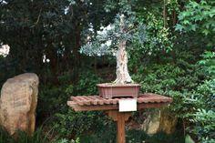 Bonsai Tree   by Sam Howzit