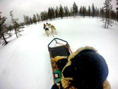 A lire sur #iesegabroad l'échange de Karoline à Jyväskyla en #Finlande I #JAMK  #erasmus #exchangeyear #ieseg #nature #forest