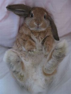 Silly bunny with cute bunny toes! Cute Bunny Pictures, Cute Animal Photos, Baby Pictures, Cute Baby Bunnies, Funny Bunnies, Big Bunny, Bunny Bunny, Cute Little Animals, Cute Funny Animals