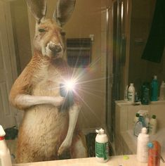 These wildlife selfies from the National Geographic x Diomedia BR campaign are AMAZING - Dose