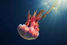 Los milagros del mundo submarino
